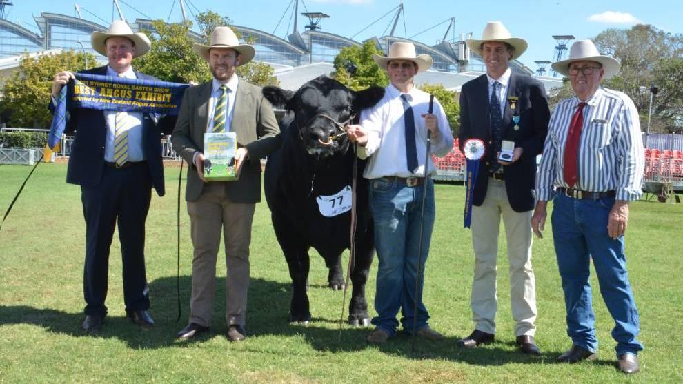 NSW border closure won't slow down Ekka 2021 cattle ...